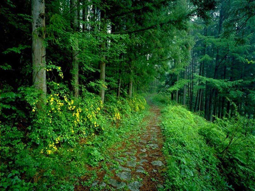 зеленый лес, тропинка, скачать фото