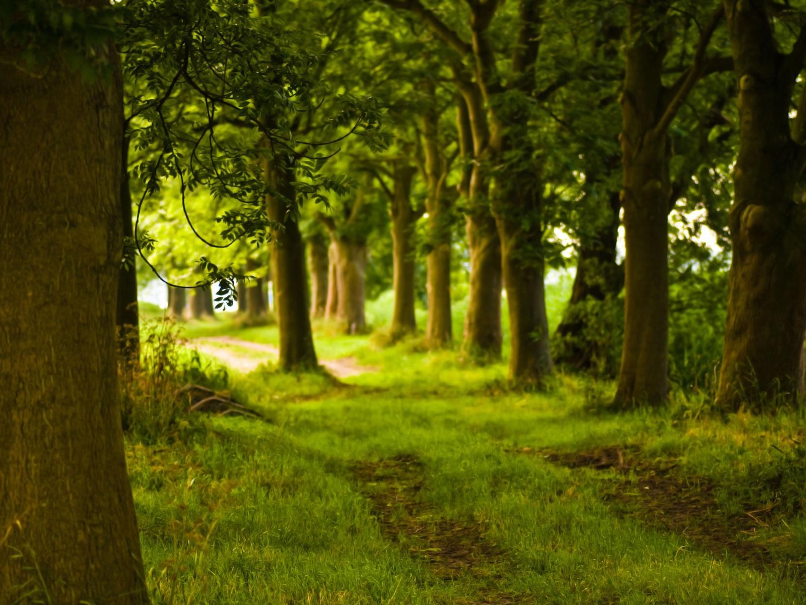 зеленый лес, скачать фото, обои на рабочий стол, деревья