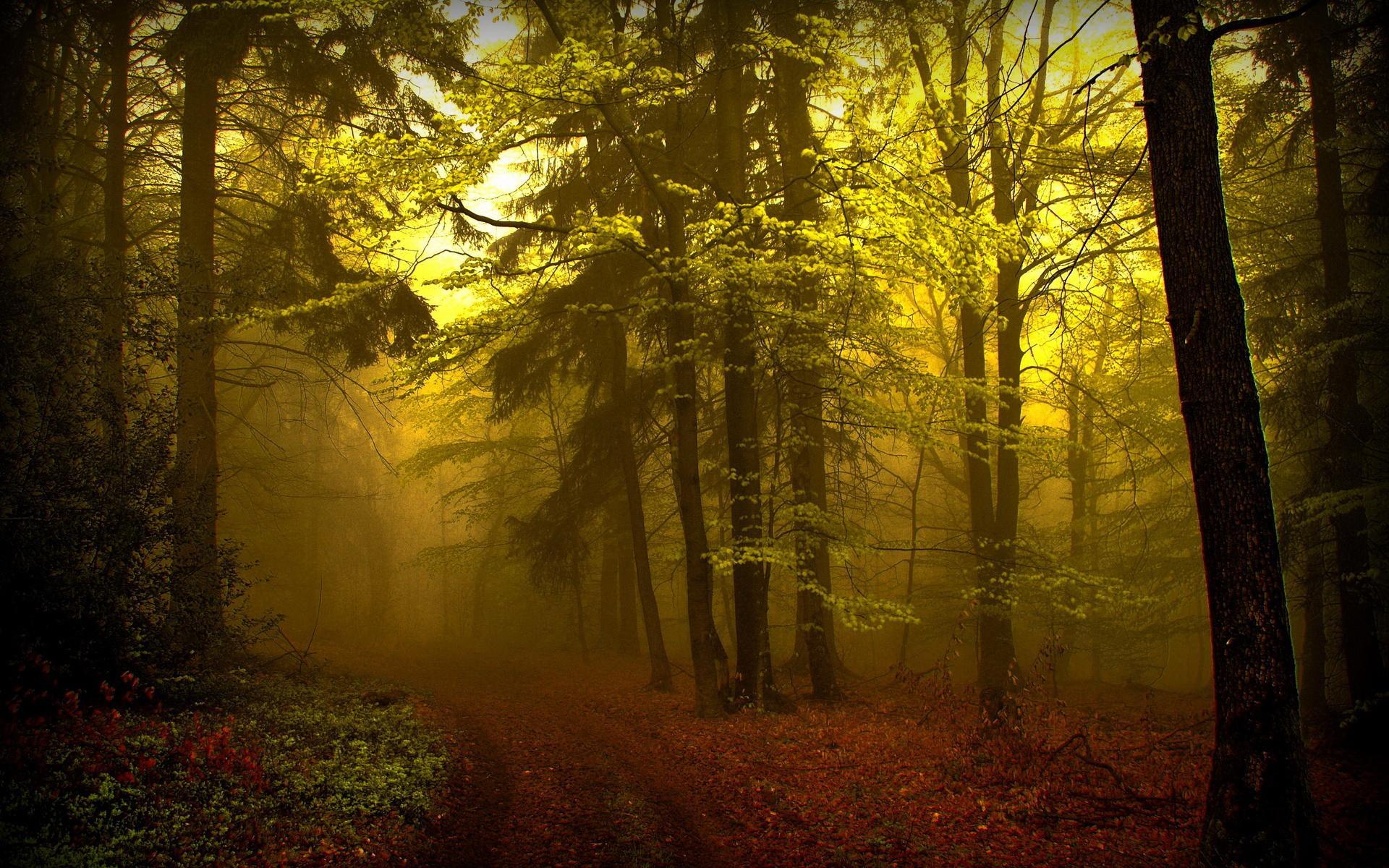 сумерки в лесу, желтая дымка, лес, скачать фото