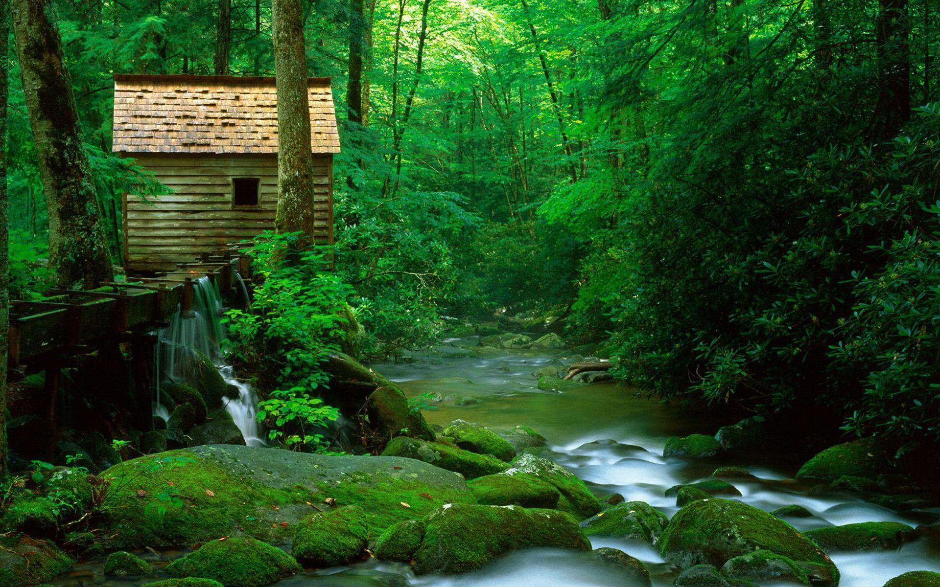 избушк а вгустом зеленом лесу, скачать фото, обои для рабочего стола