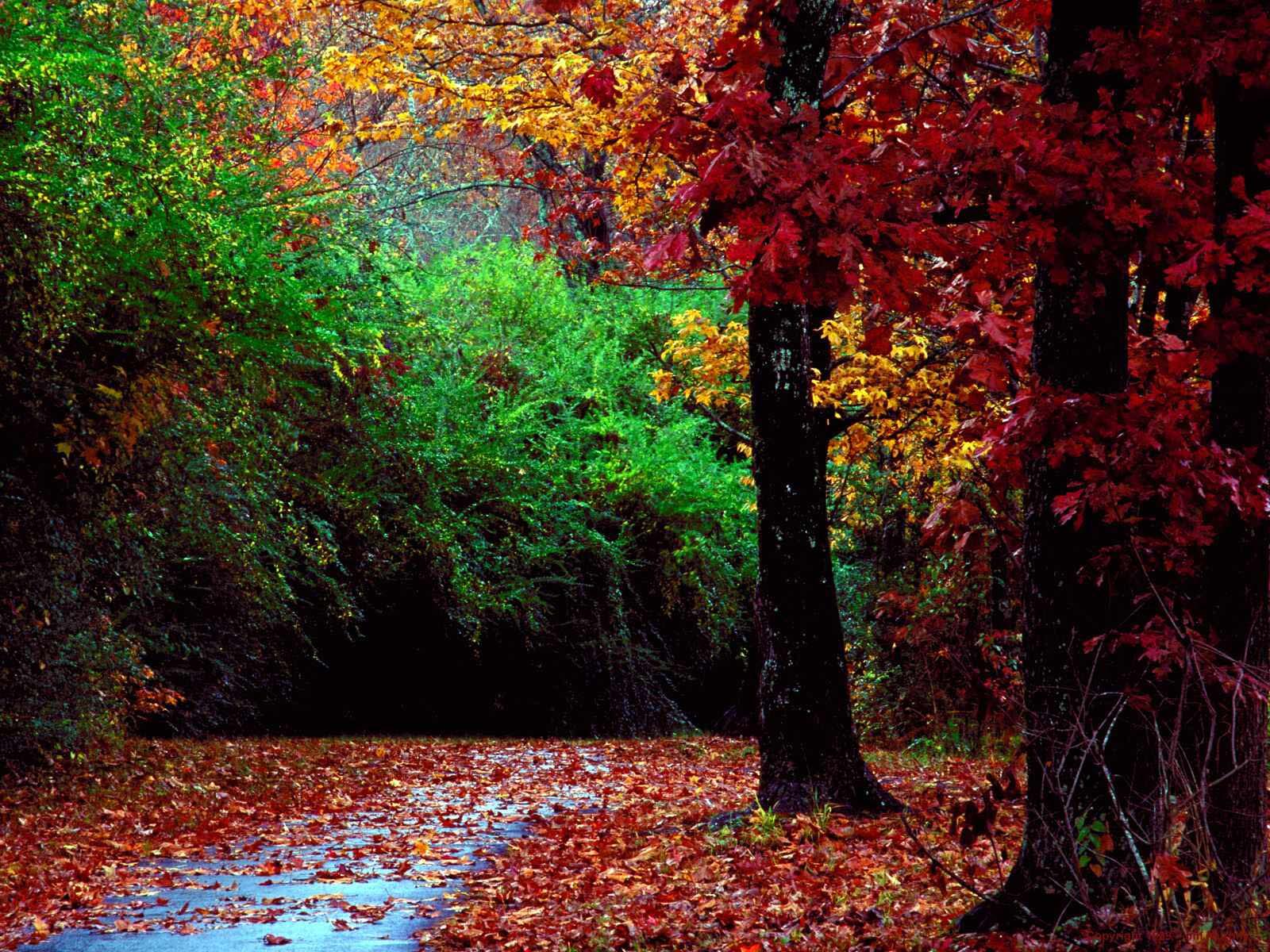 осень в лесу, скачать фото, обои для рабочего стола, лес