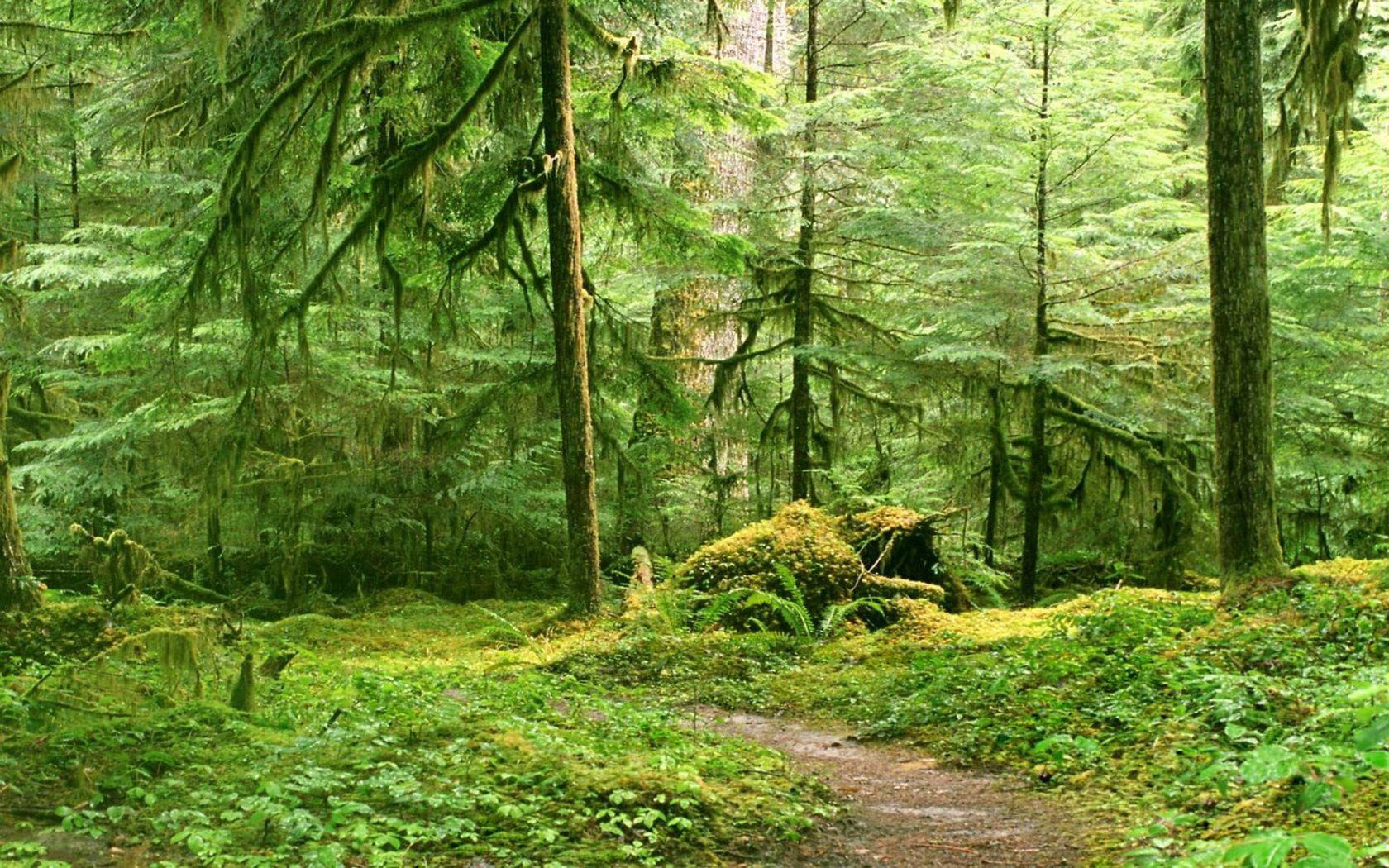 зеленый лес, скачать фото, обои на рабочий стол