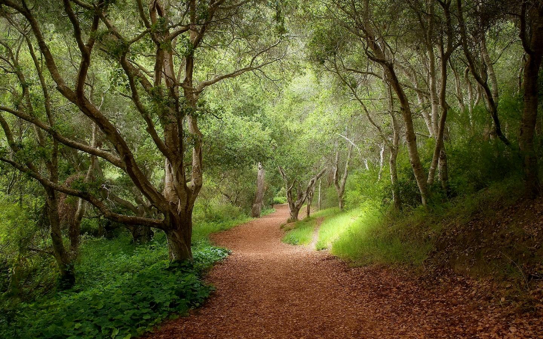 тропинка в лесу, скачать фото, деревья, лес