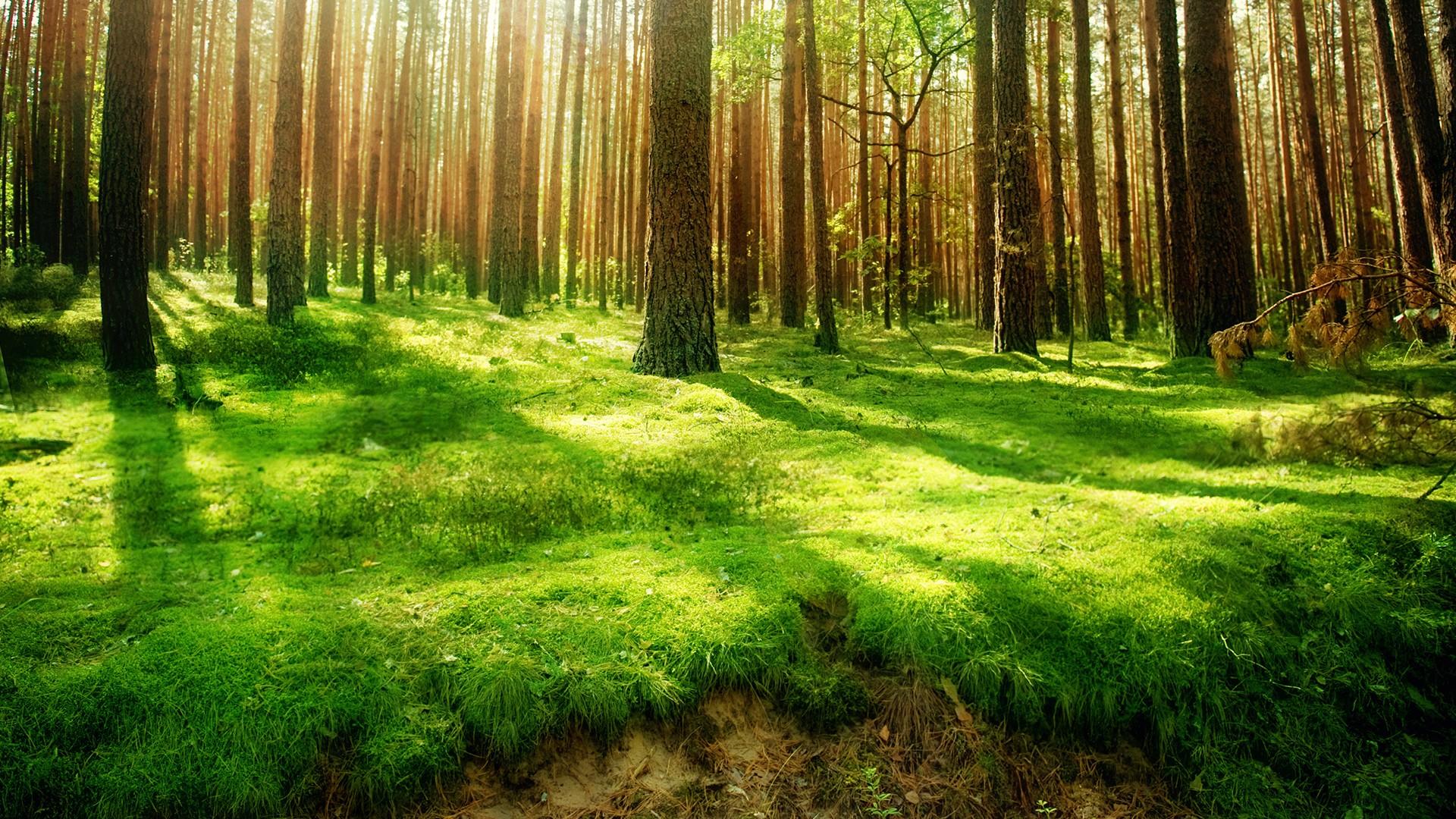 зеленая травка в лесу, скачать фото, деревья, лес
