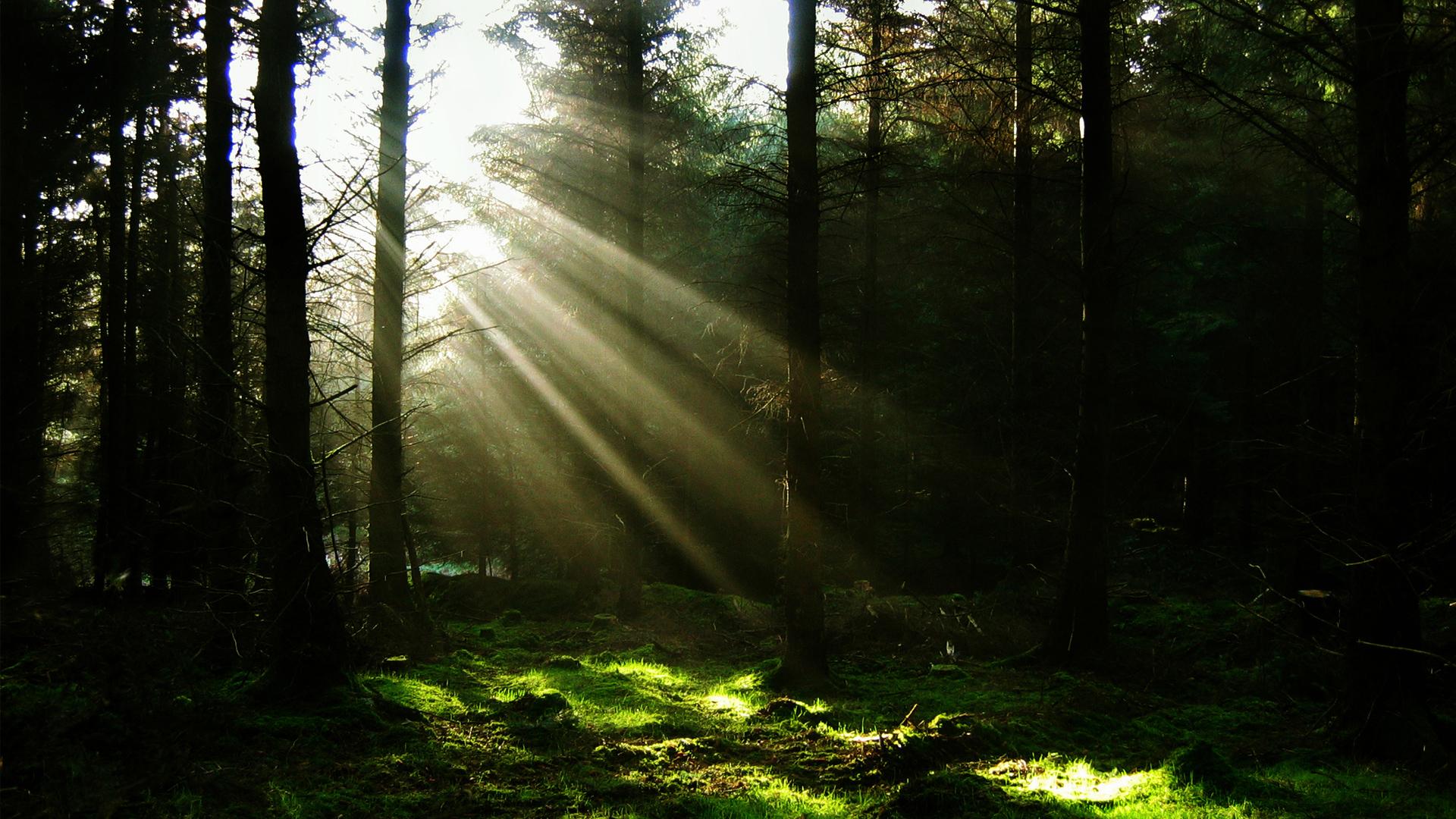 свет солнца в темном лесу, скачать фото, обои для рабочего стола