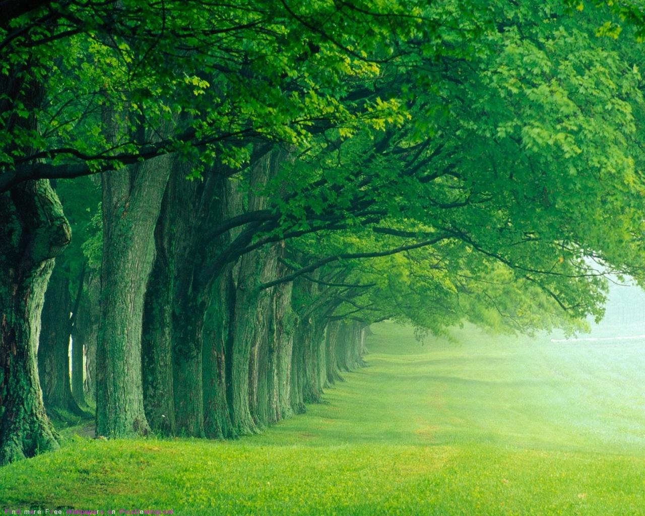 зеленоватая дымка в лесу, лес, скачать фото, деревья