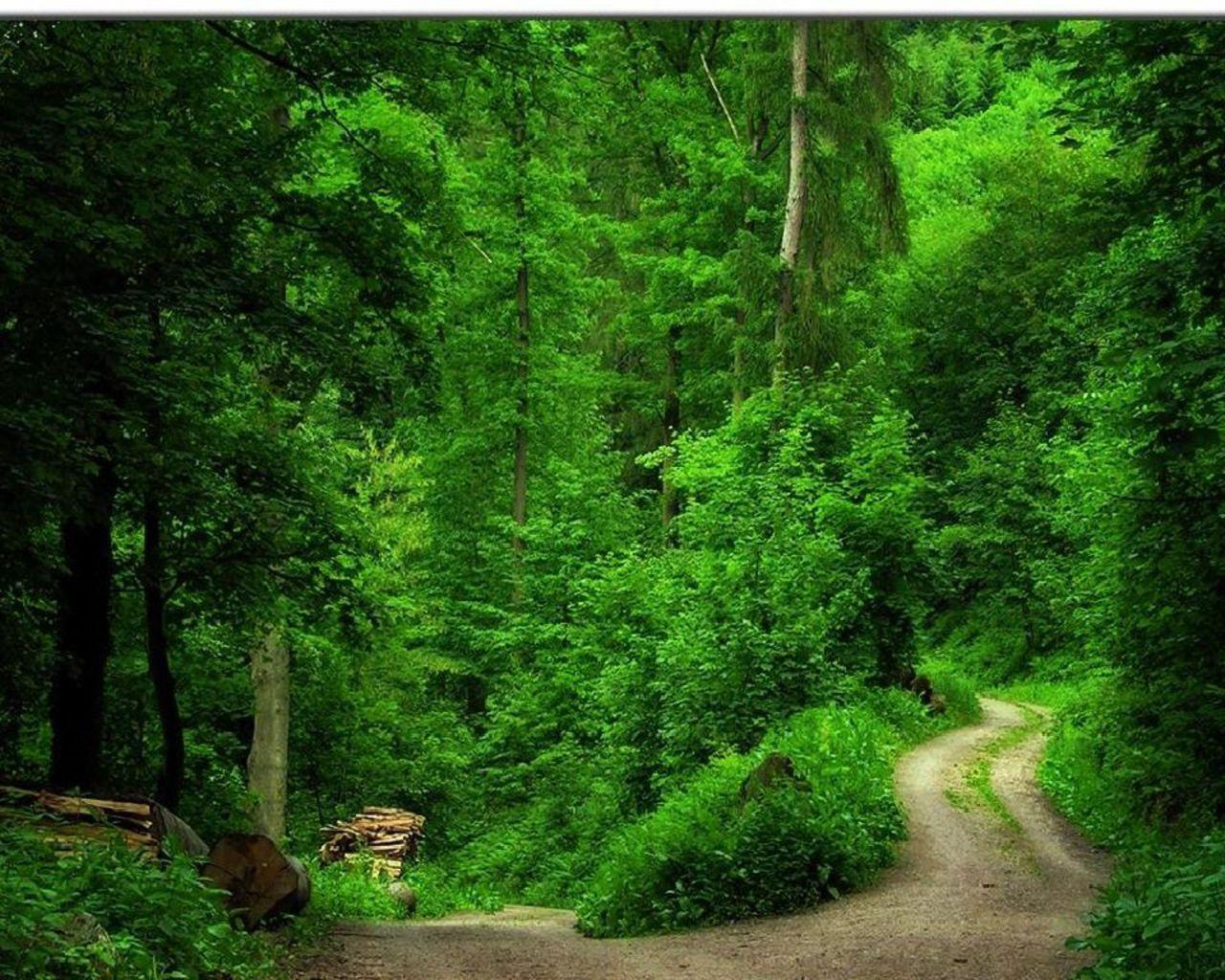 зеленый лес, тропинка, скачать фото, деревья
