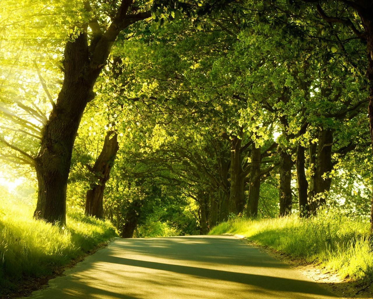 солнечный свет среди деревьев, скачать фото, обои для рабочего стола, лес