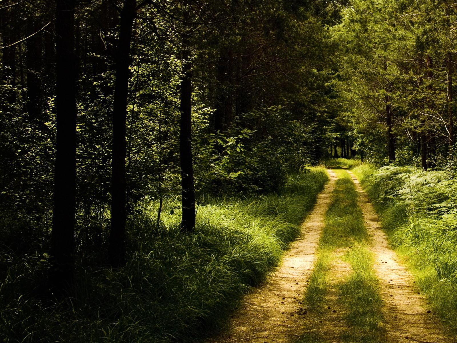 дорога в лесу, скачать, тени, солнечный свет