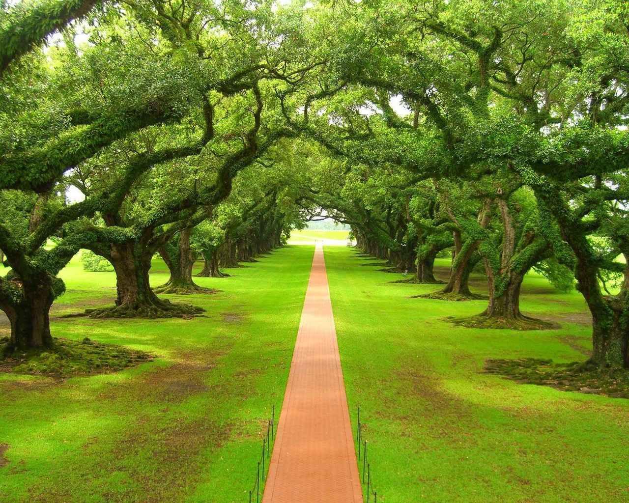 ровная тропинка среди деревьев, лес, скачать фото