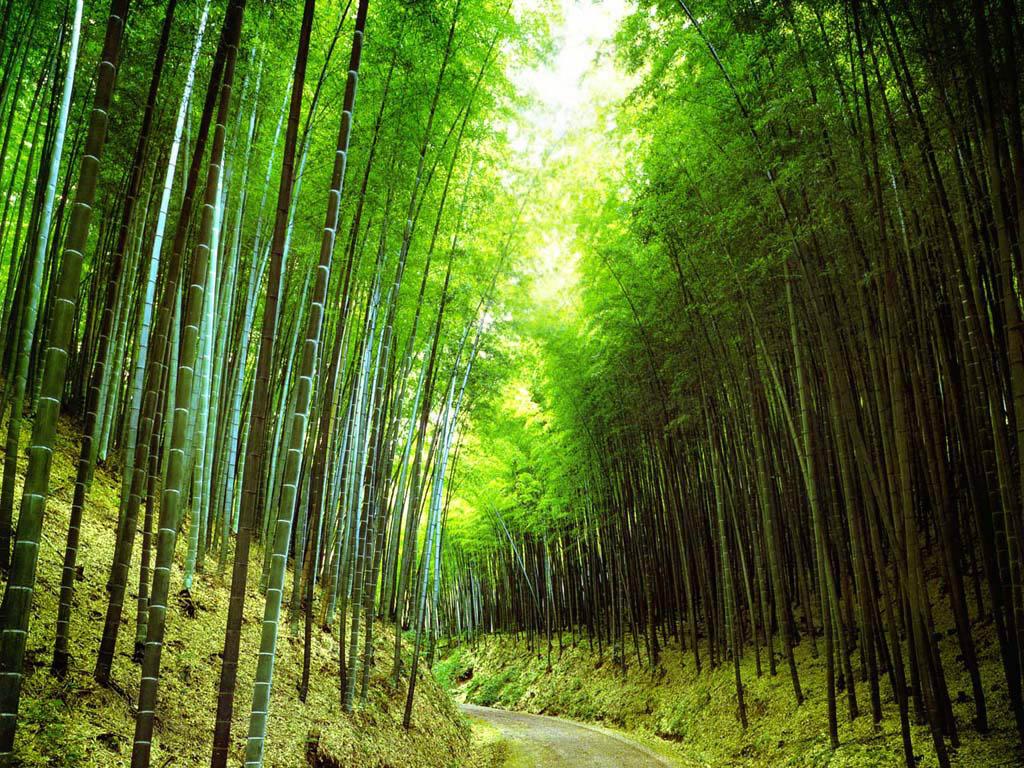 просека, лес, скачать фото, деревья, обои для рабочего стола