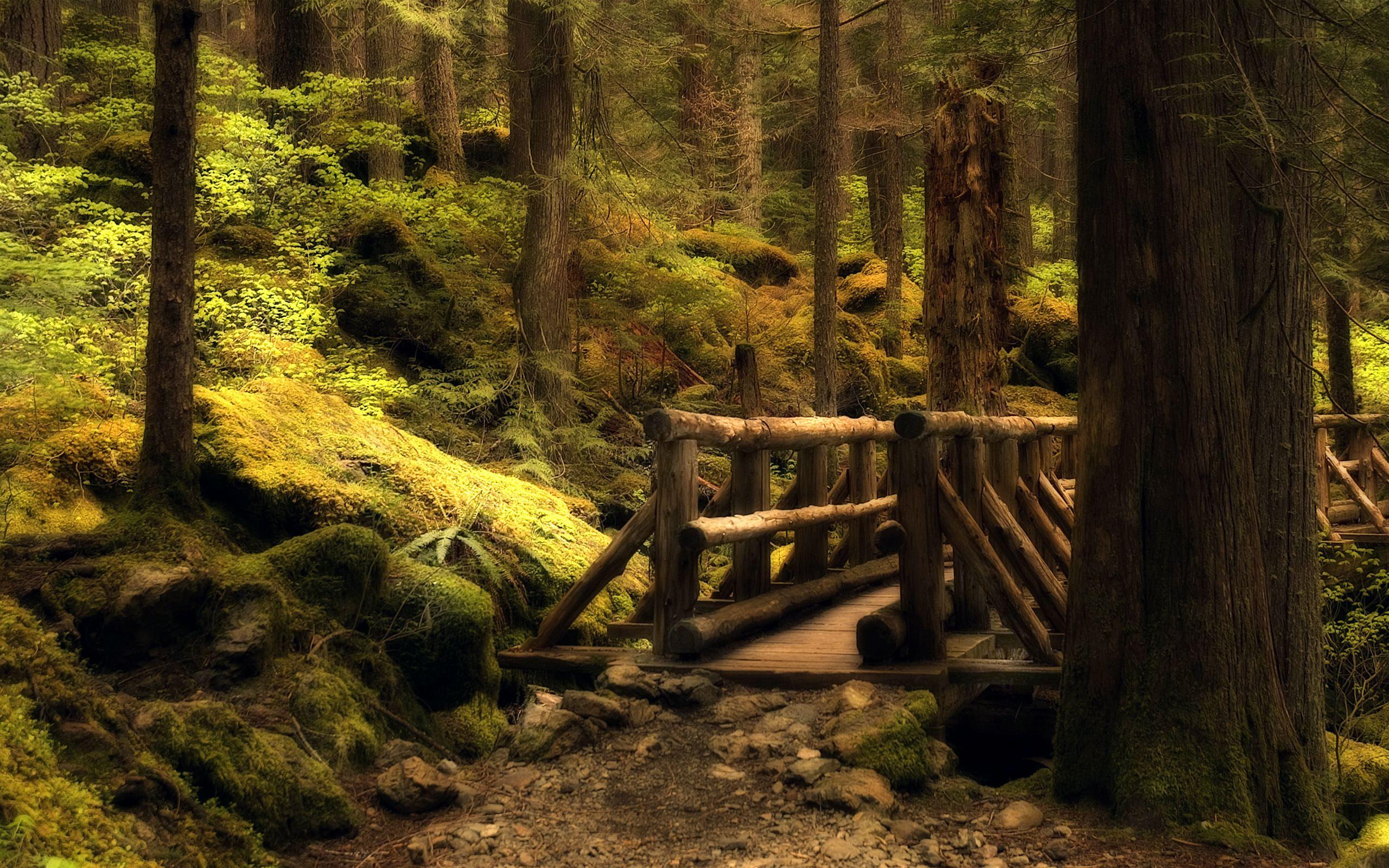 лес, красивое фото, мост в лесу, скачать фото, обои для рабочего стола
