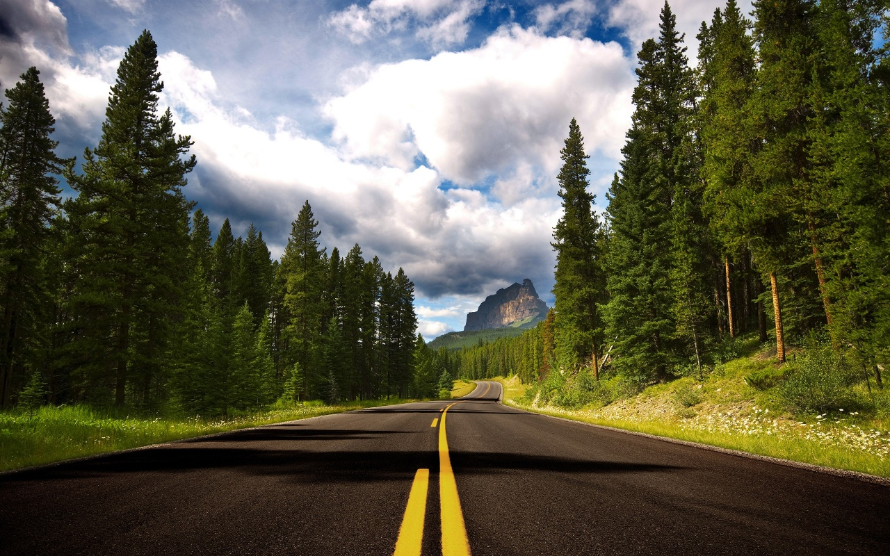 шоссе среди леса, скачать фото, елки, деревья, обои для рабочего стола
