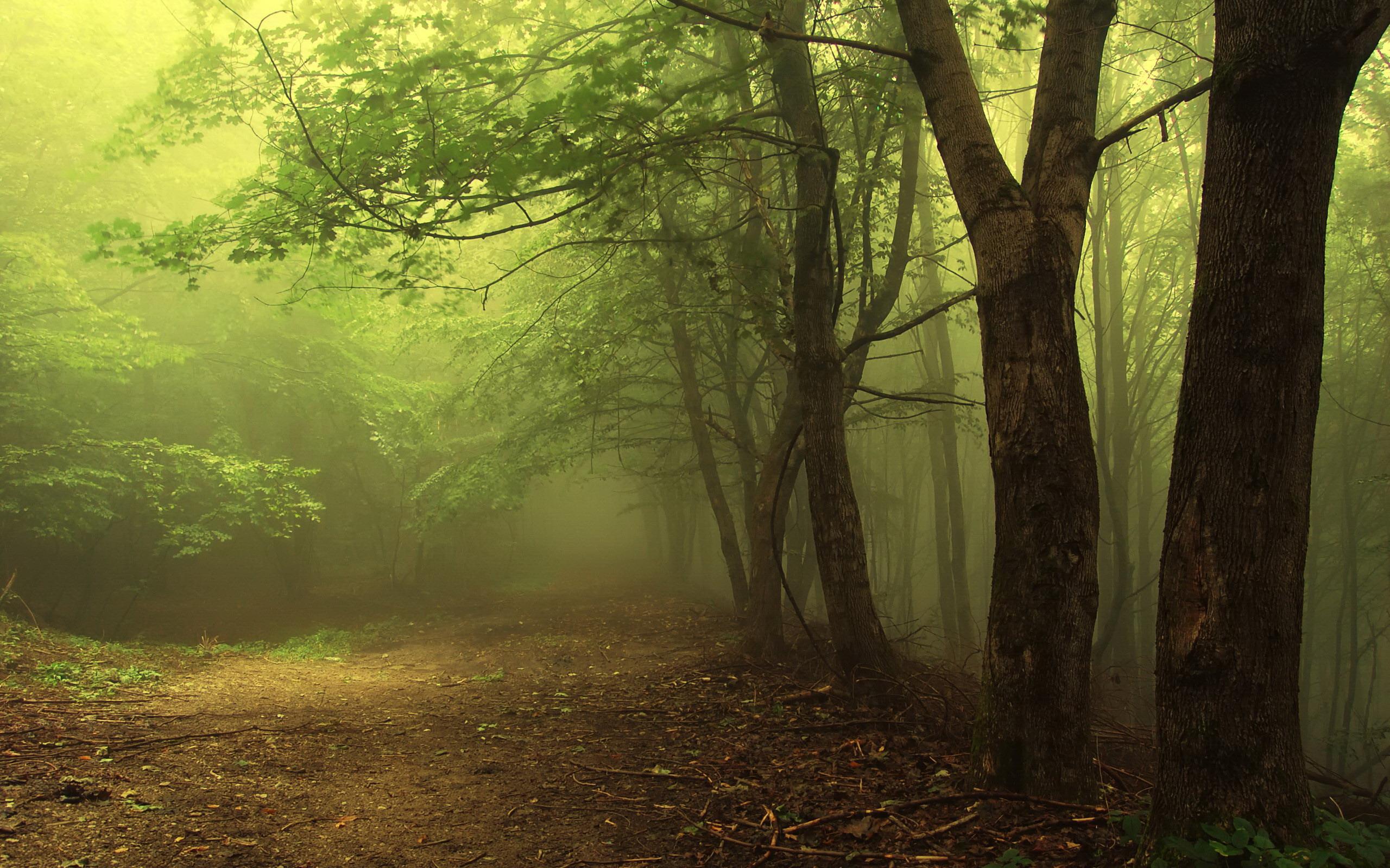 туман в лесу, лес, скачать фото, деревья