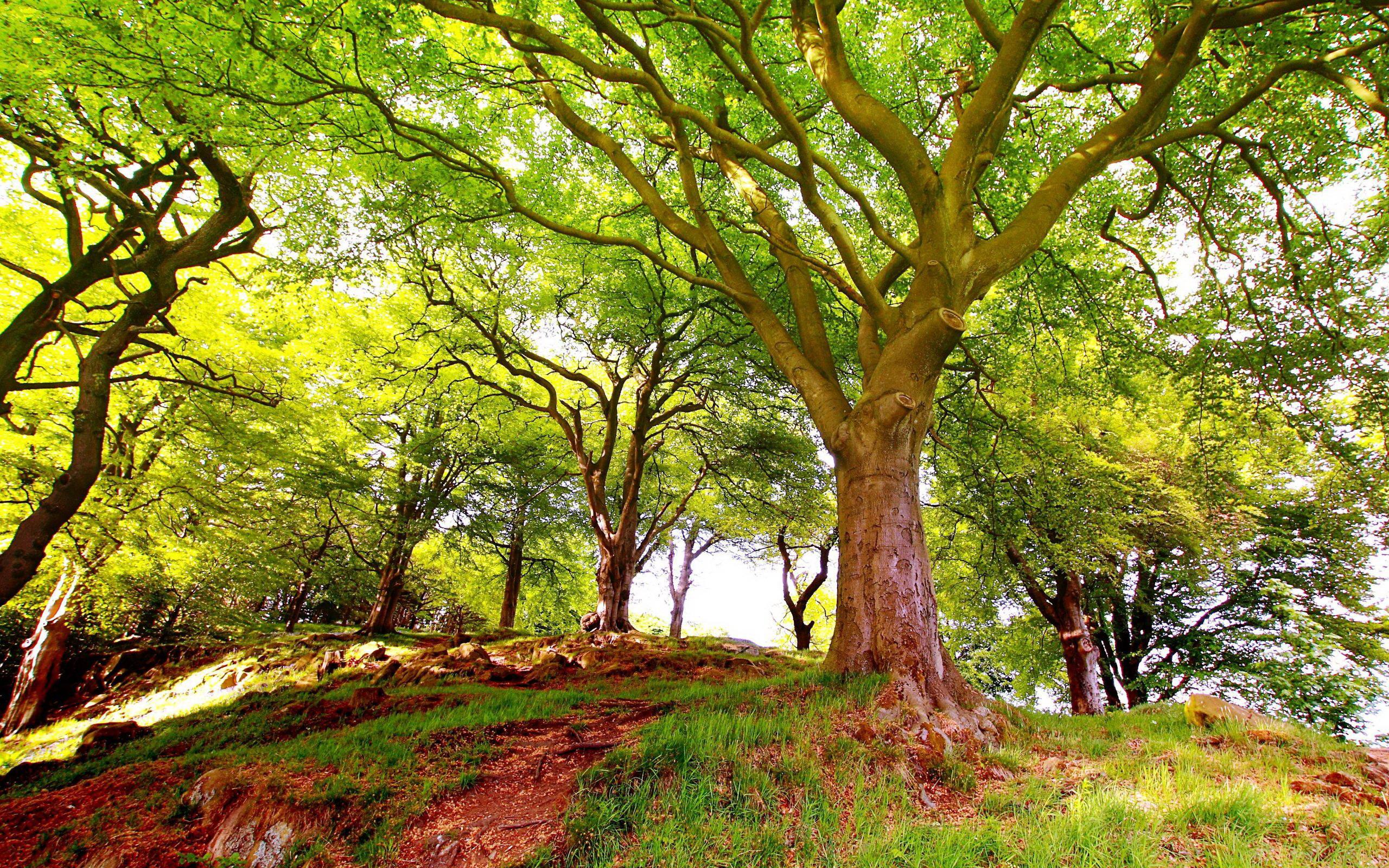 лес в горах, деревья, скачать фото
