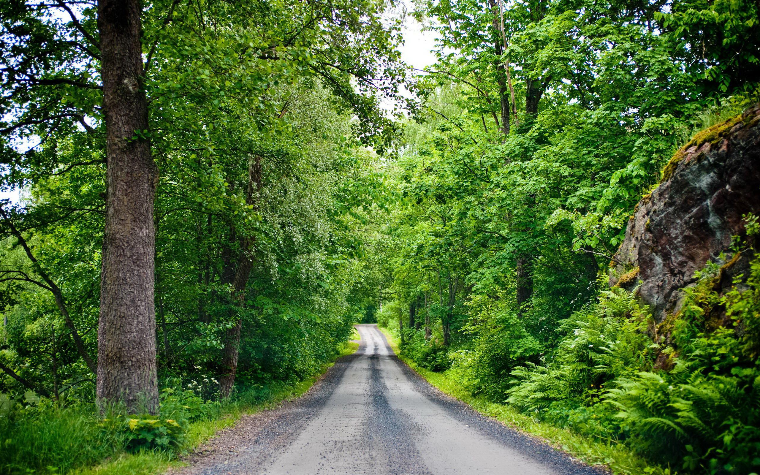 дорога в лесу, деревья, зеленый лес, фото