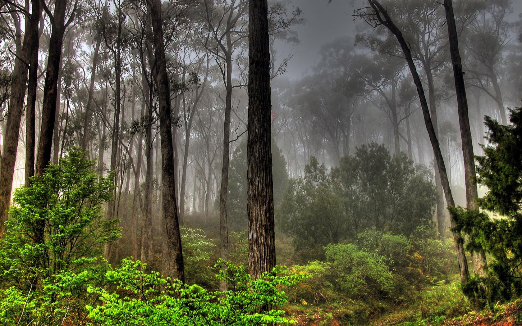 фотографии леса: