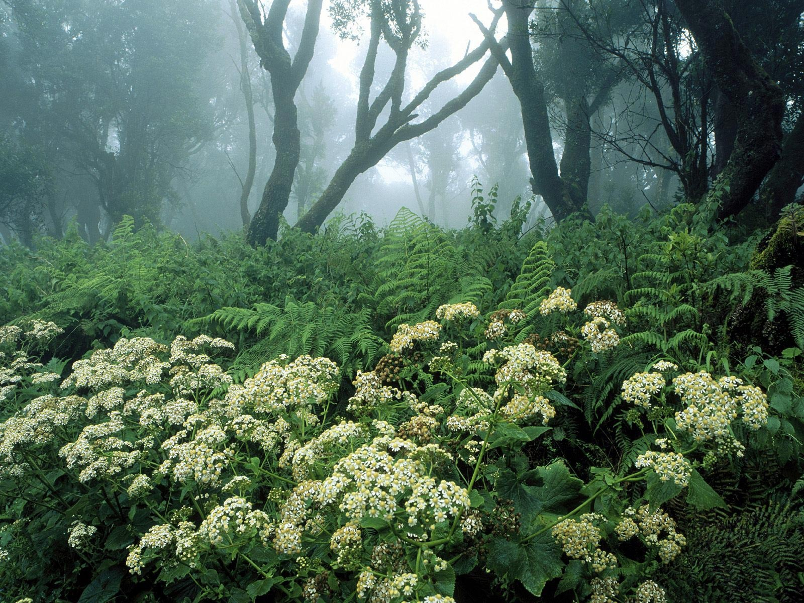цветы в лесу, скачать фото, обои для рабочего стола скачать