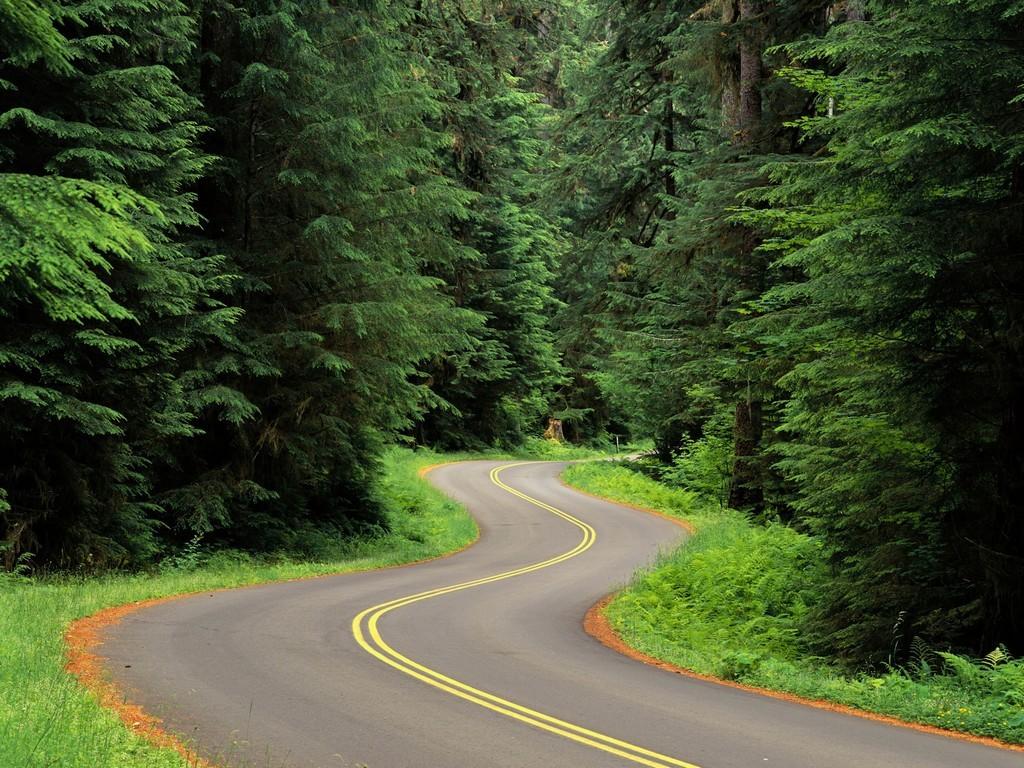 извилистая дорога среди леса, скачать фото, елки, обои на рабочий стол