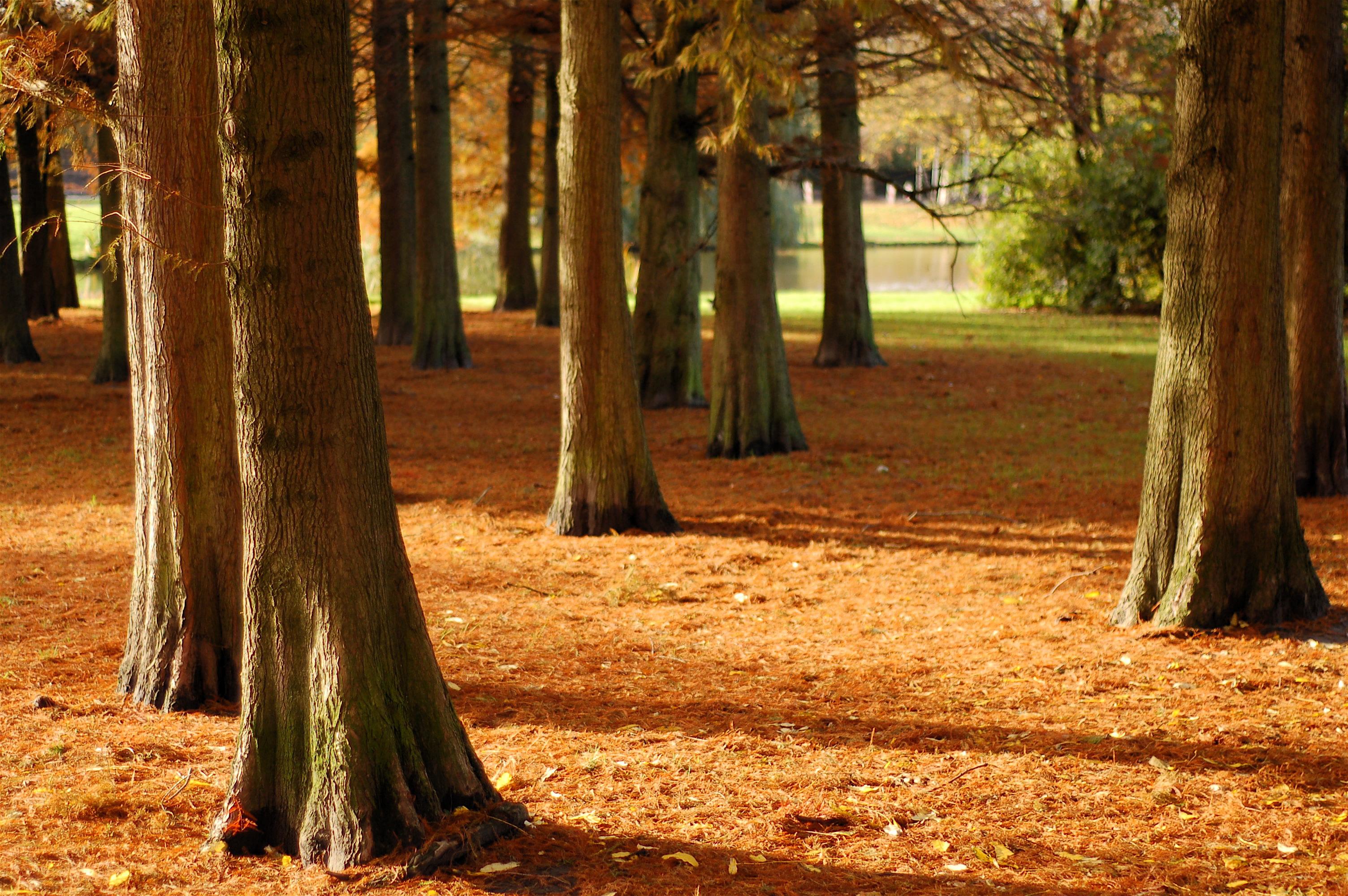 осень, опавшие листья, лес, стволы деревьев, скачать фото