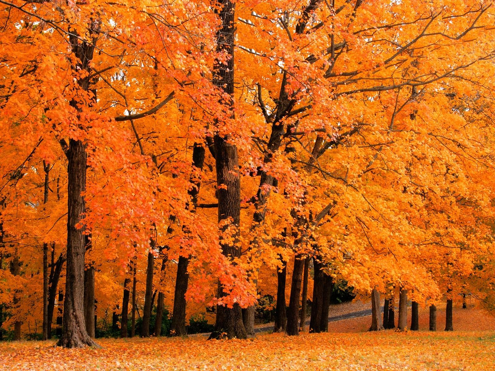 оранжевые осенний листья, листопад, осень, обои для рабочего стола