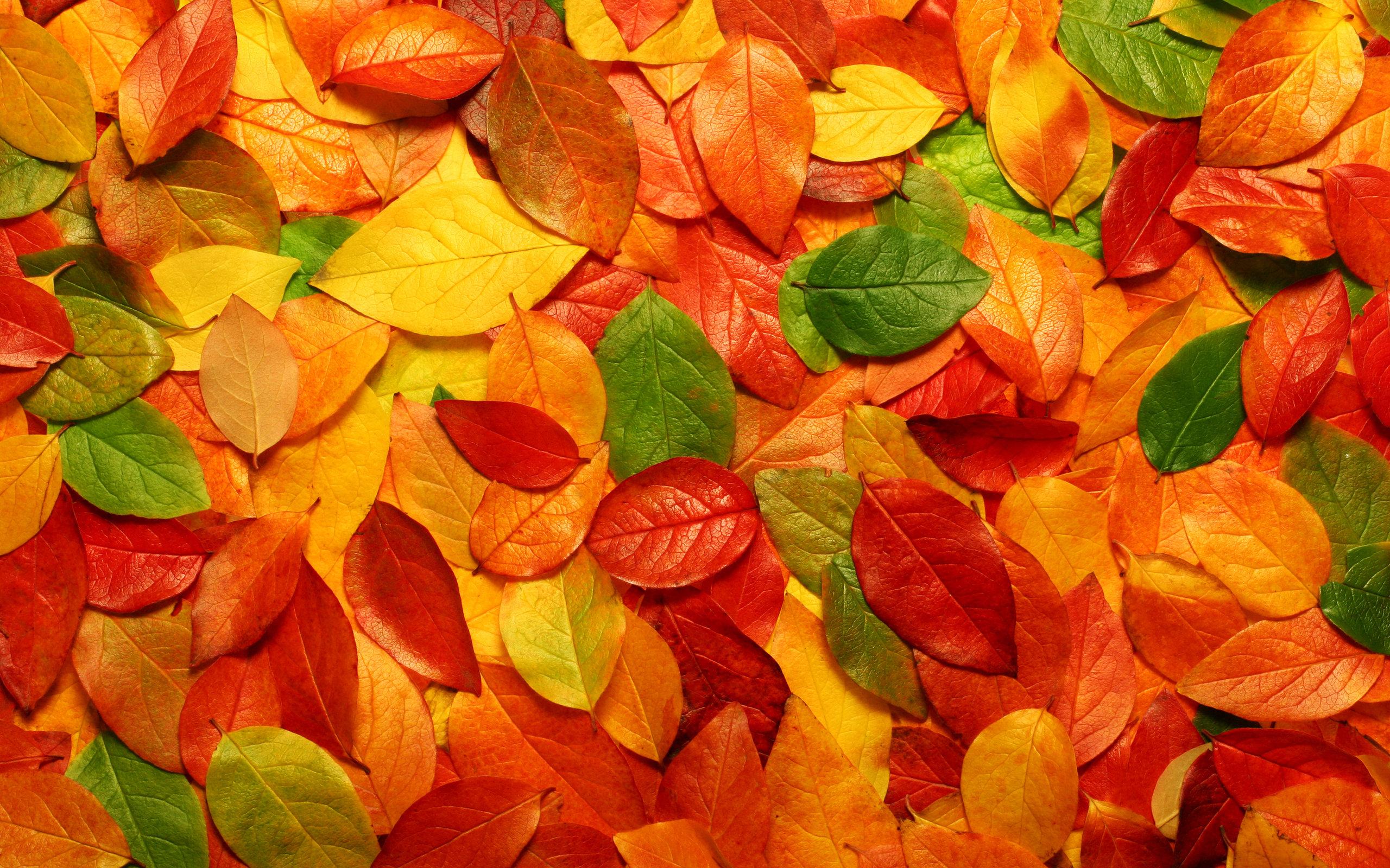 осенние опавшие листья, скачать фото, обои на рабочий стол, autumn leaves