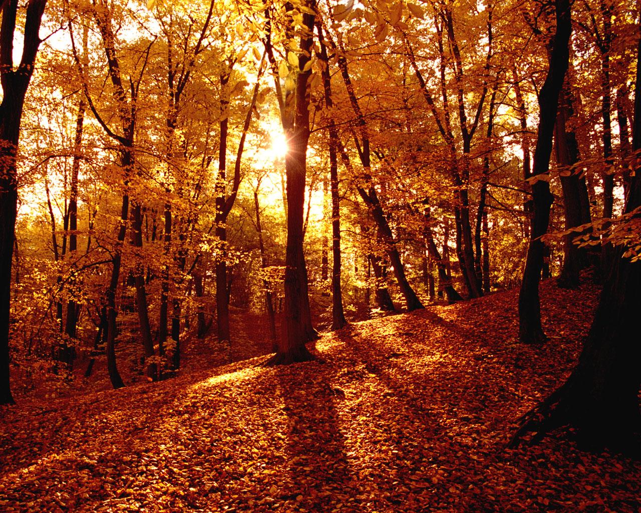 осенний лес, скачать фото, листопад, рыжая листва, autumn leaves wallpaper