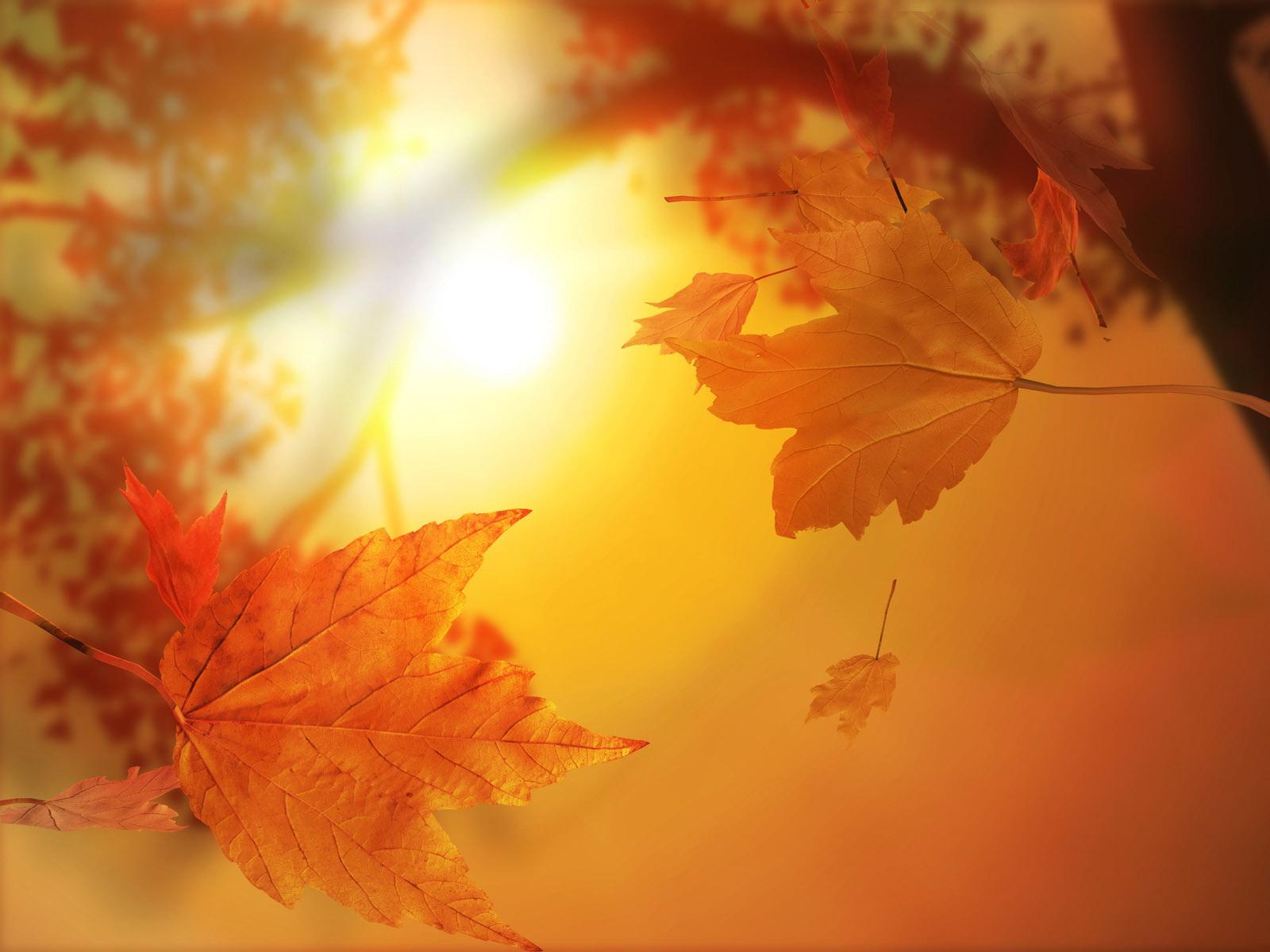 осеннее солнца, скачать фото, листья, обои для рабочего стола