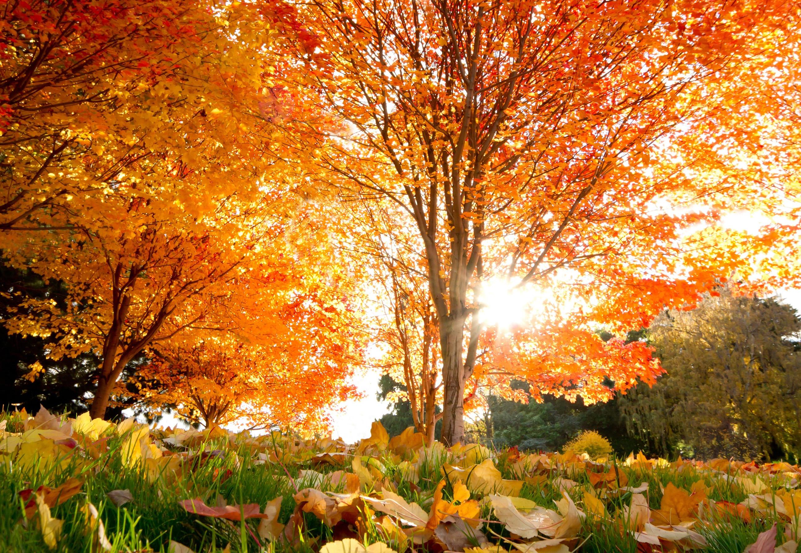 осенние деревья, скачать фото, обои для рабочего стола, осень