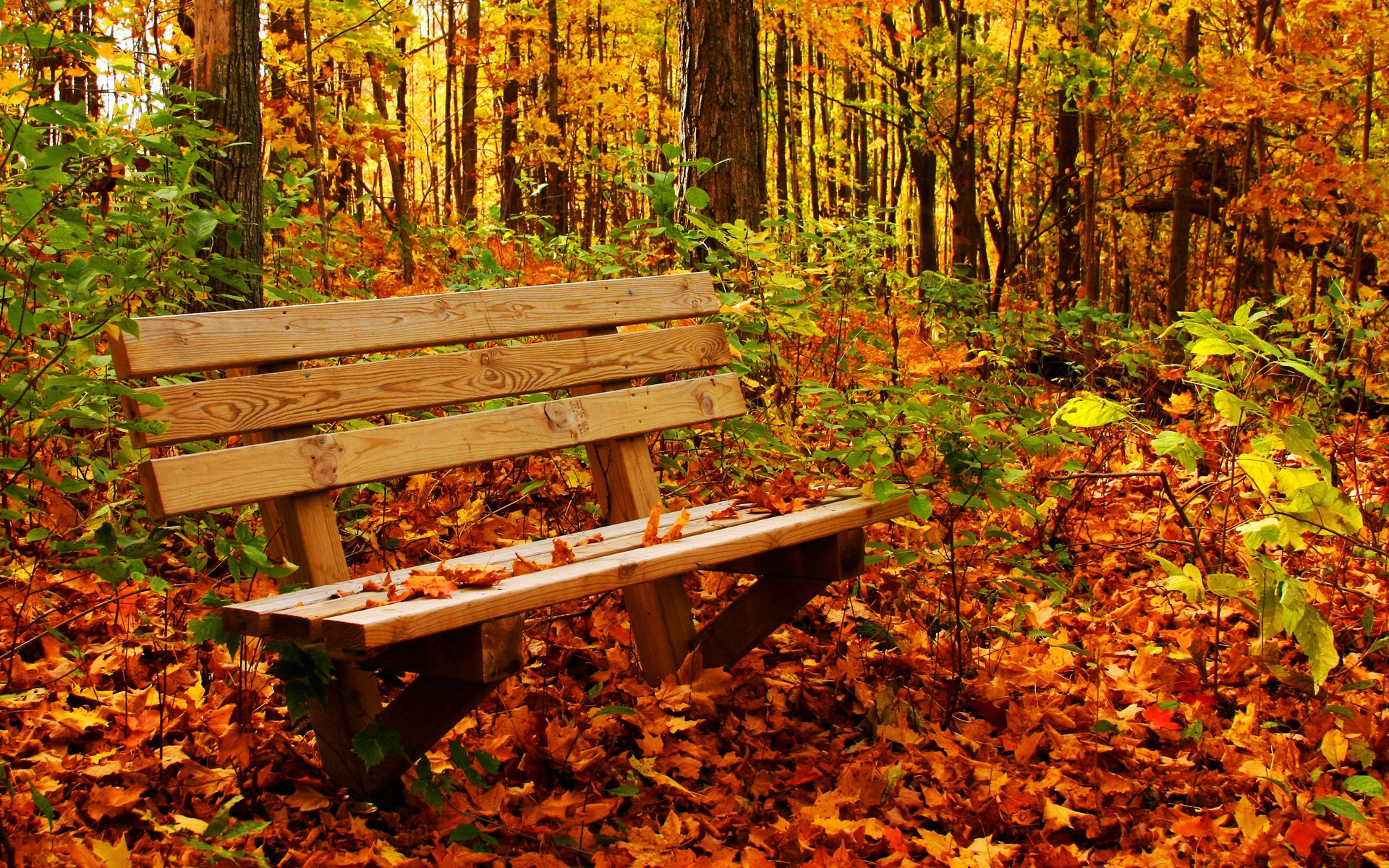 осень, листопад, опавшие листья, скачать фото, обои на рабочий стол, лавочка