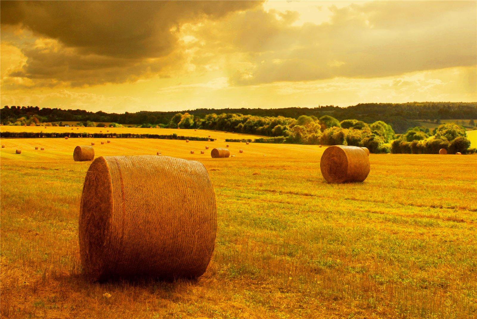 осеннее поле, скошенная трава, обои на рабочий стол, осень