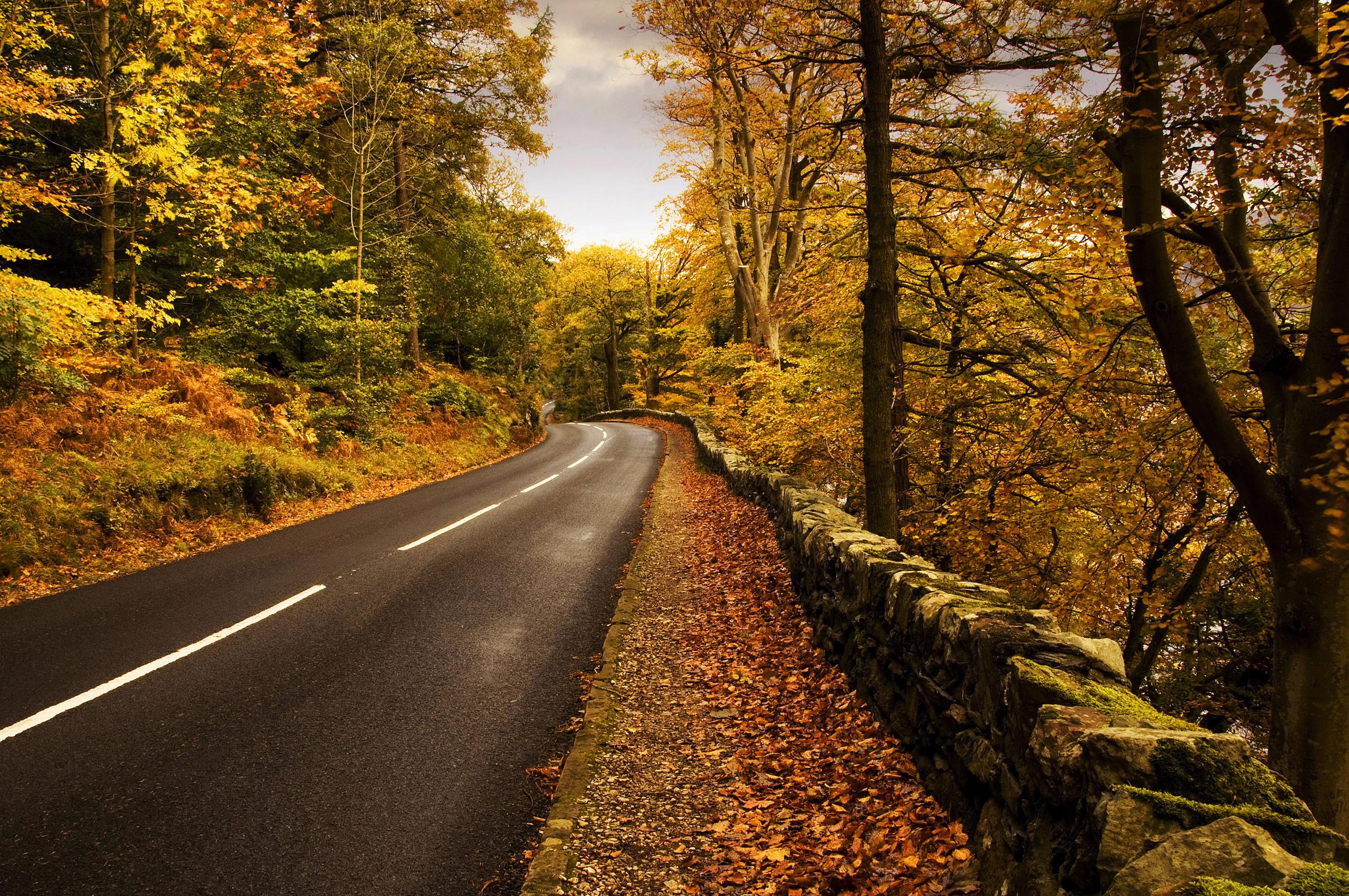 дорога, шоссе, осень, опавшие листья, скачать фото