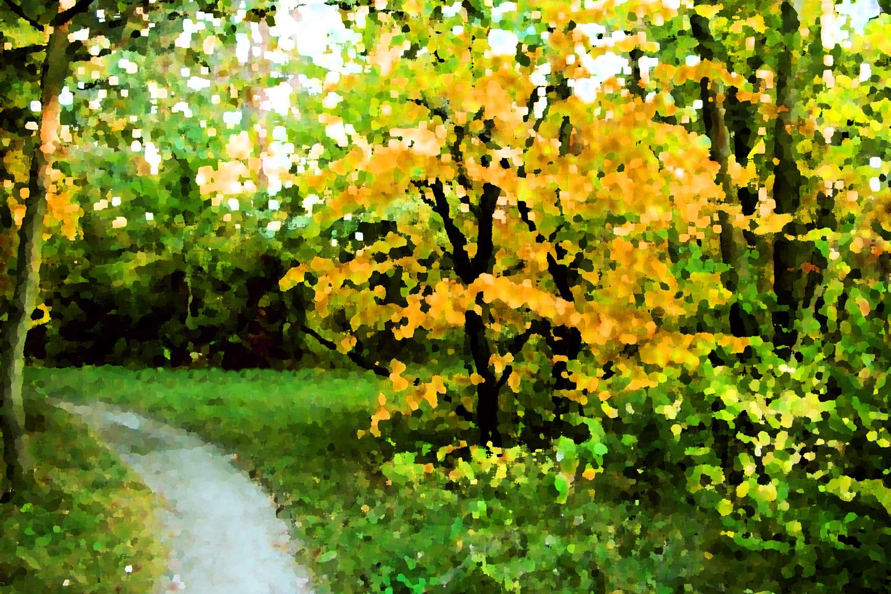 осень, листва, деревья, кусты, обои для рабочего стола, лес