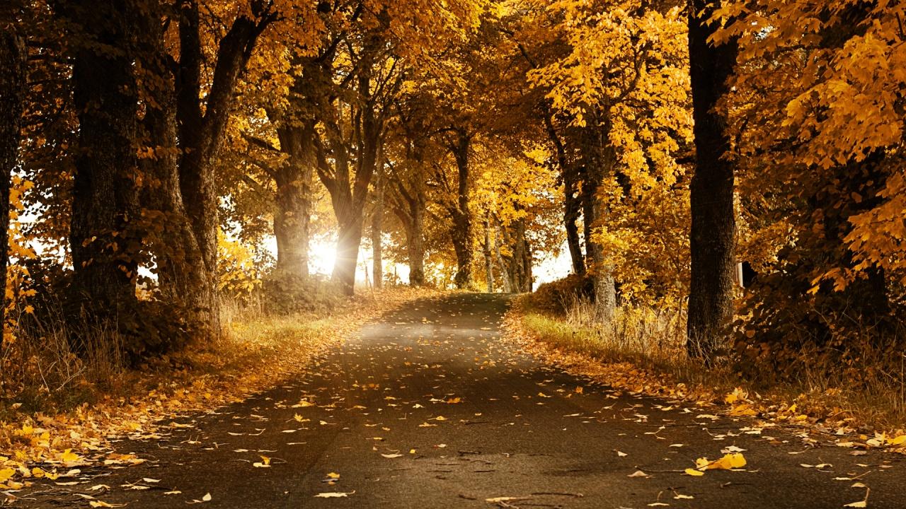 осення дорога, скачать фото, опавшая листва, листья, желтые, осень