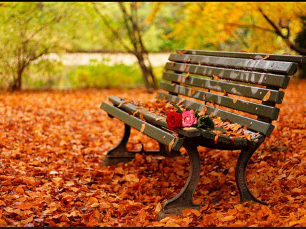 скамейка, осень, скачать обои для рабочего стола, опавшие листья, листопад