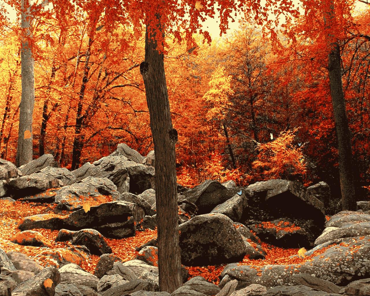 осень, камни, опавшие листья, листопад, обои на рабочий стол, autumn wallpaper