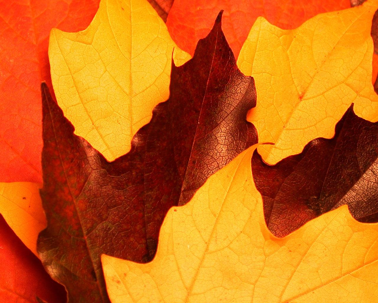 autumn wallpaper, скачать обои для рабочего стола, осень, листья