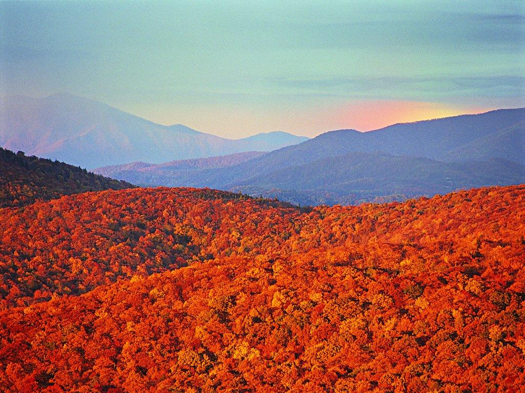 осенние деревья, скачать фото, рыжая листва, оранжевая, обои на рабочем столе