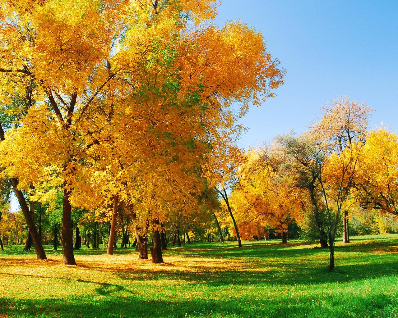 осенний лес, скачать фото, желтая трава, деревья, осень