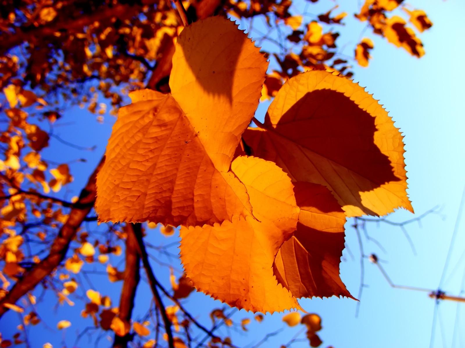 осень, листья, скачать фото, обои для рабочего стола