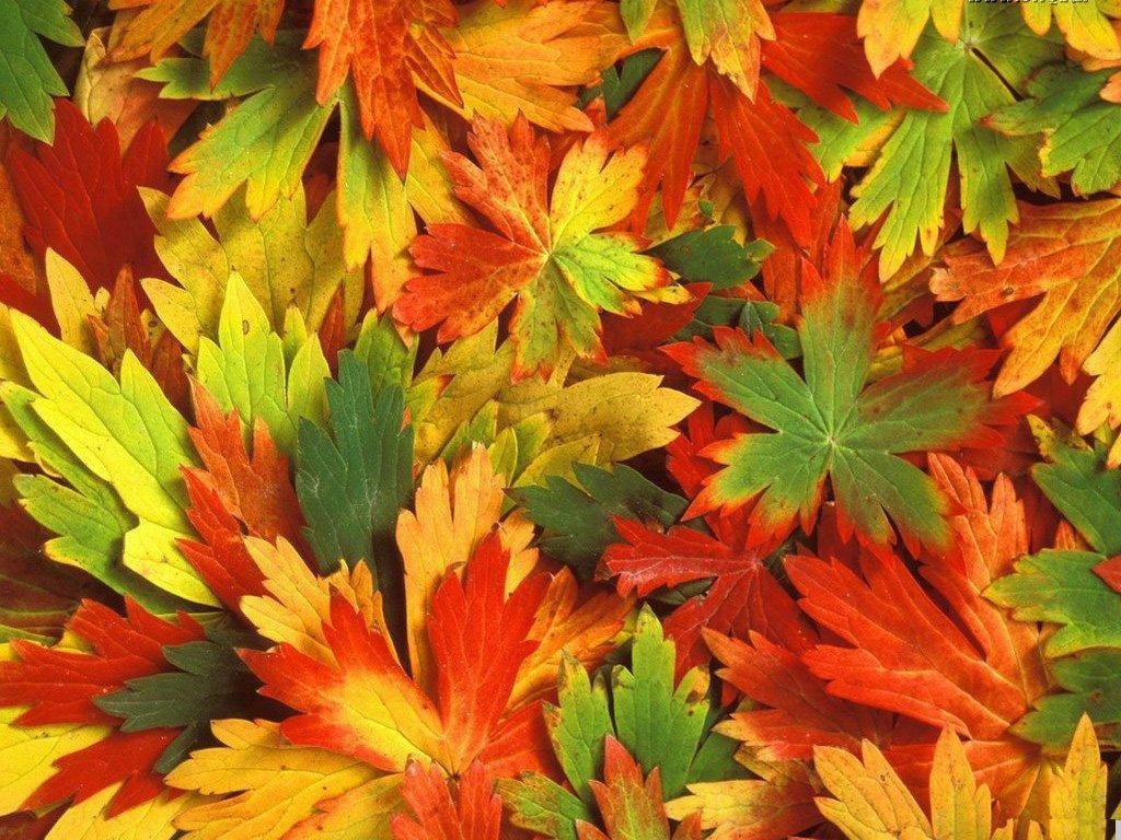 листья, осень, обои на рабочий стол, листопад, autumn wallpaper