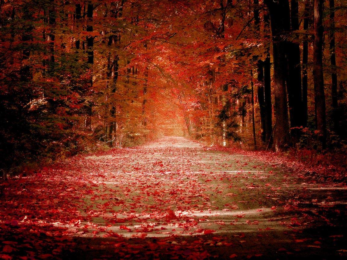 красные осенние листья, осень, листопад, скачать фото, autumn wallpaper