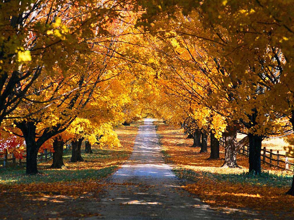 осень, желтые листья, скачать фото, дорожка, деревья, лес