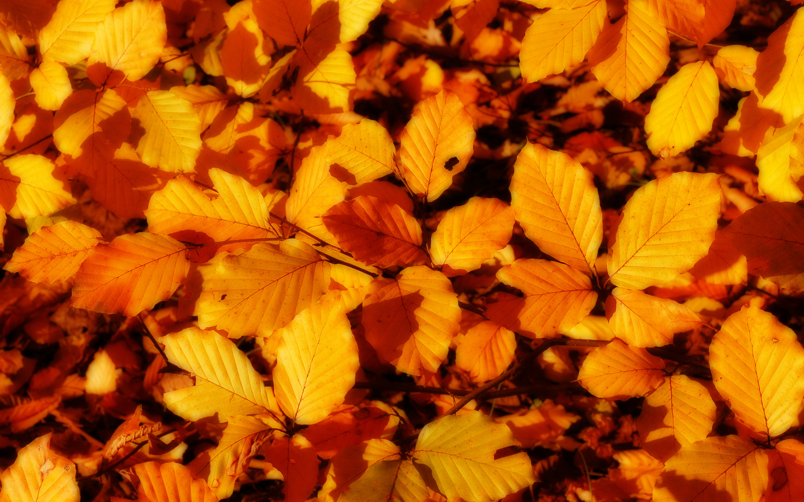 листья, осень, скачать фото, обои для рабочего стола, листопад