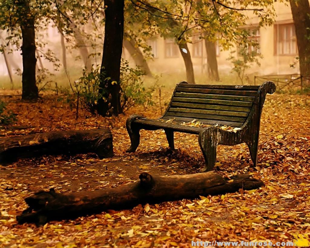 осень, листья, листва опавшая, скачать фото, обои на рабочий стол, autumn wallpaper