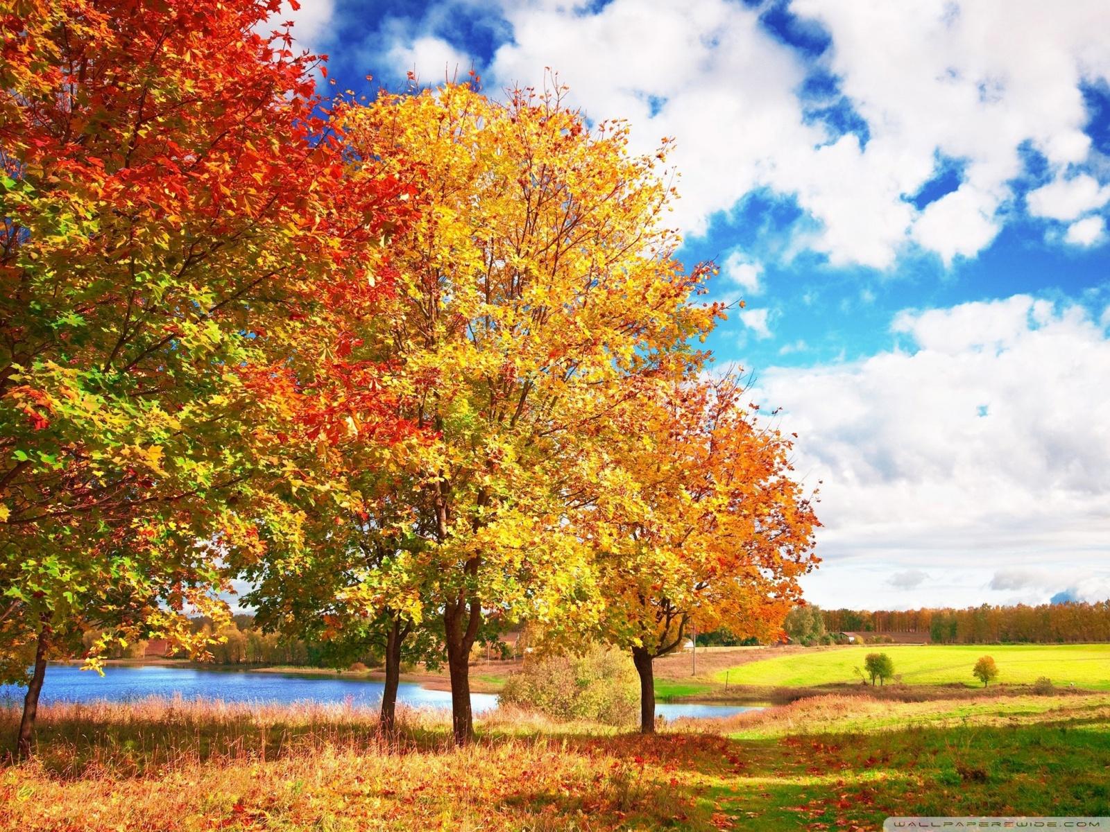 осень, небо, облака, скачать фото, осенние деревья, лес скачать фото, обои для рабочего стола