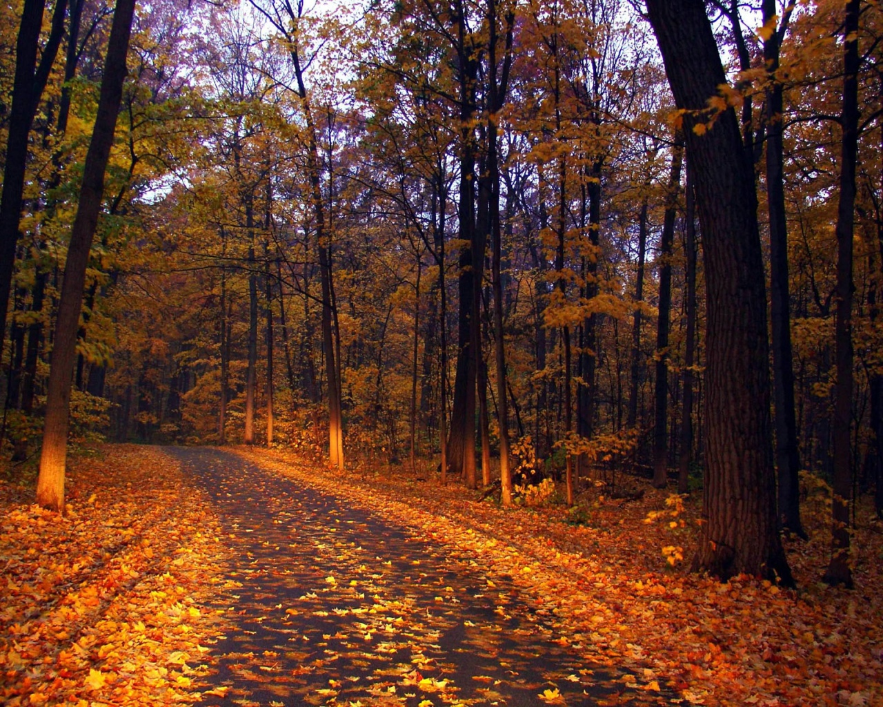 осень, дорога, сырость, опавшая листва, обои, красивое фото