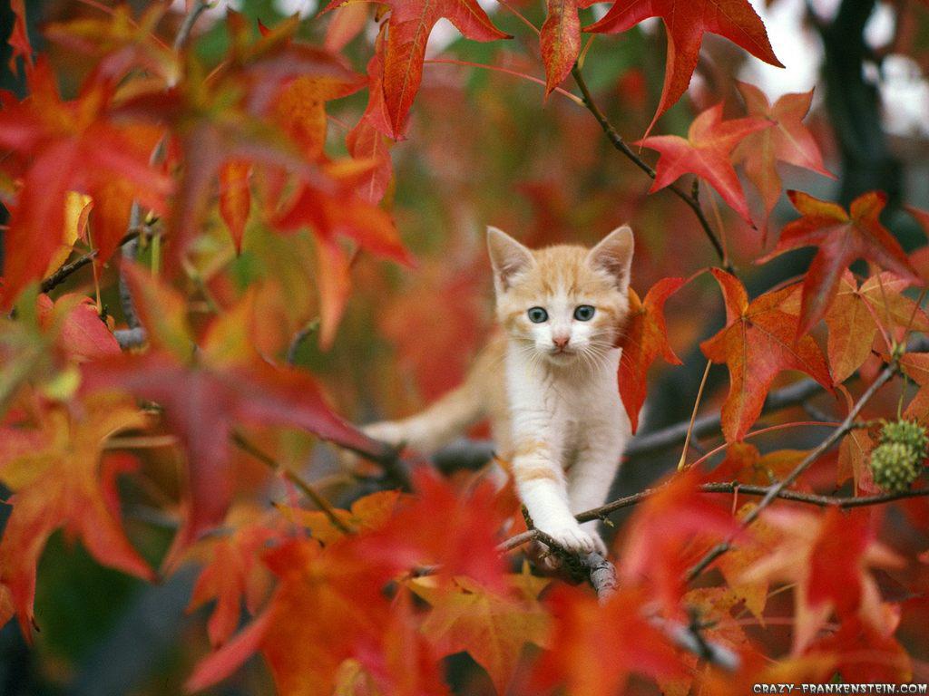 осень, листва, котенок на дереве, скачать фото, обои для рабочего стола