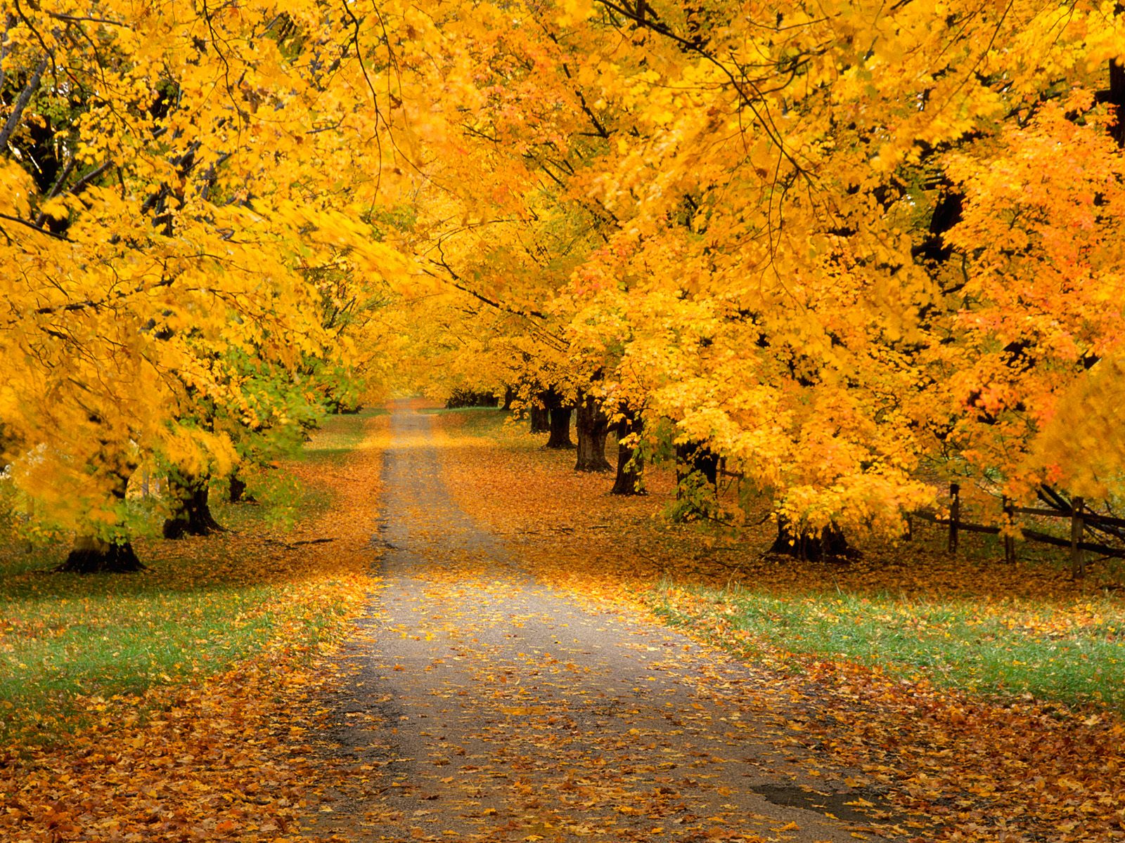 желтые листья, скачать фото, осень, лес, обои на рабочий стол