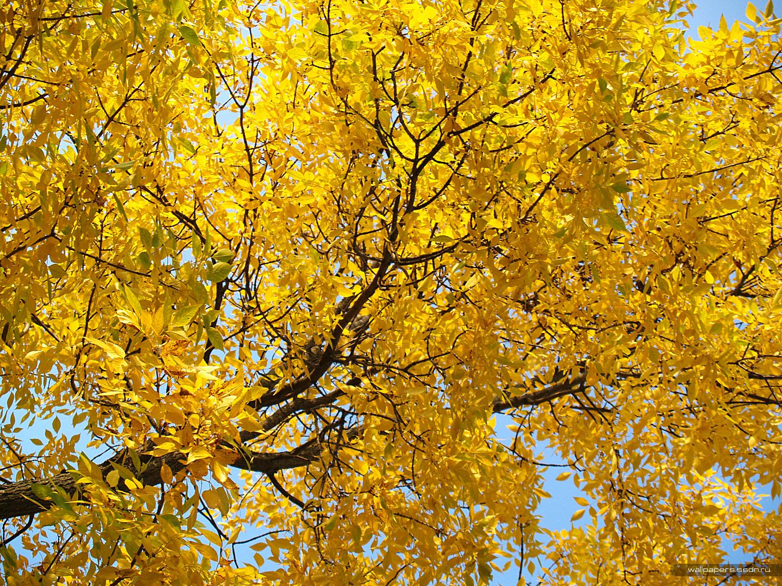 желтые листья, скачать фото, осень, обои на рабочем столе